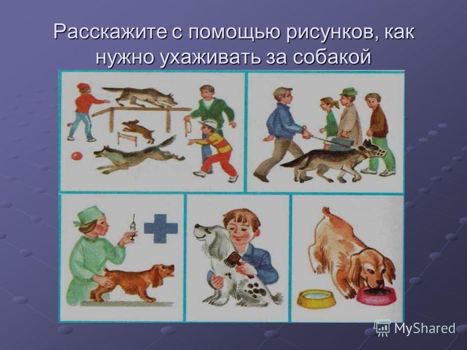 Расскажите с помощью рисунков, как нужно ухаживать за собакой