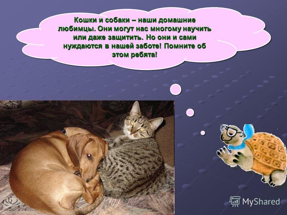 Кошки и собаки – наши домашние любимцы. Они могут нас многому научить или даже защитить. Но они и сами нуждаются в нашей заботе! Помните об этом ребята!