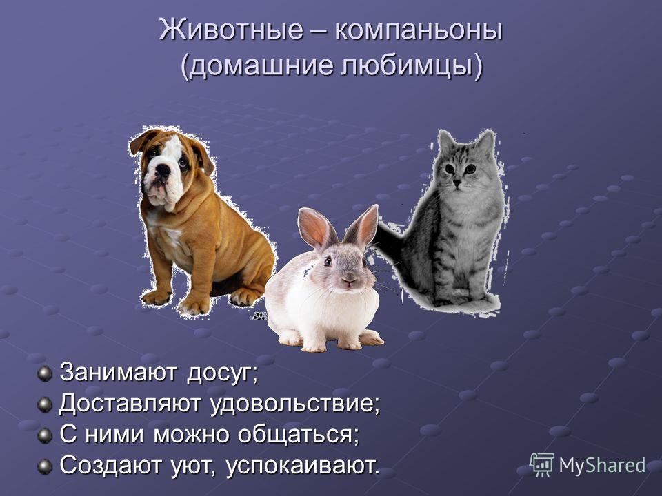 Животные – компаньоны (домашние любимцы) Занимают досуг; Доставляют удовольствие; С ними можно общаться; Создают уют, успокаивают.