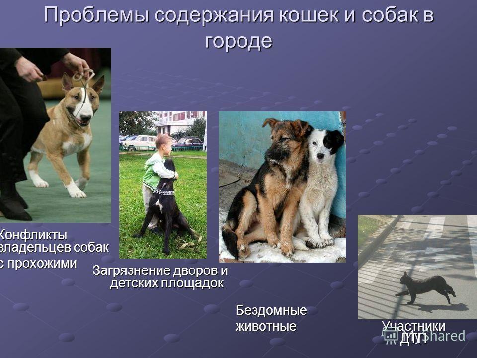 Проблемы содержания кошек и собак в городе Бездомныеживотные Конфликты владельцев собак с прохожими Загрязнение дворов и детских площадок Участники ДТП