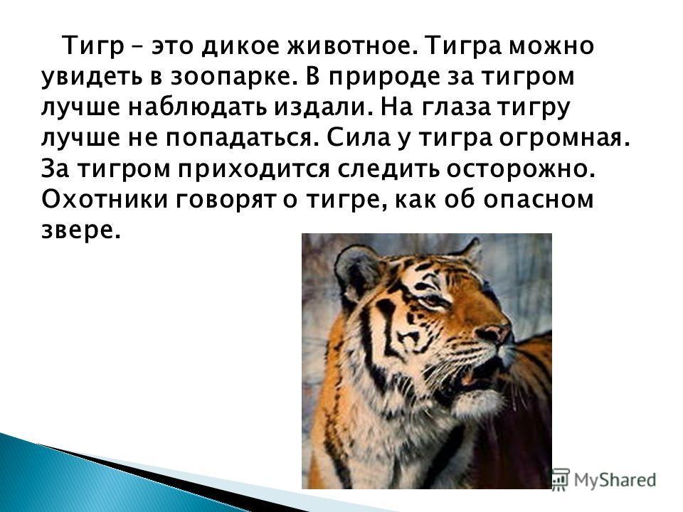 Тигр – это дикое животное. Тигра можно увидеть в зоопарке. В природе за тигром лучше наблюдать издали. На глаза тигру лучше не попадаться. Сила у тигра огромная. За тигром приходится следить осторожно. Охотники говорят о тигре, как об опасном звере.