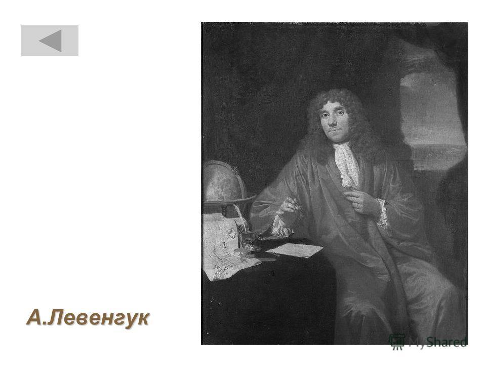 А.Левенгук