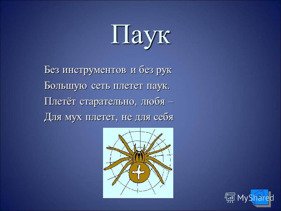 Паук Без инструментов и без рук Без инструментов и без рук Большую сеть плетет паук. Большую сеть плетет паук. Плетёт старательно, любя – Плетёт старательно, любя – Для мух плетет, не для себя Для мух плетет, не для себя