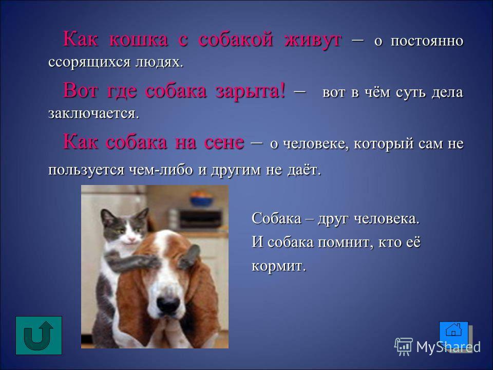 Как кошка с собакой живут – о постоянно ссорящихся людях. Как кошка с собакой живут – о постоянно ссорящихся людях. Вот где собака зарыта! – вот в чём суть дела заключается. Вот где собака зарыта! – вот в чём суть дела заключается. Как собака на сене