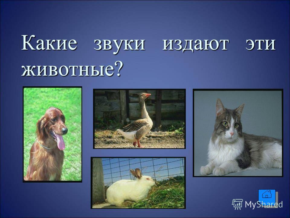 Какие звуки издают эти животные?