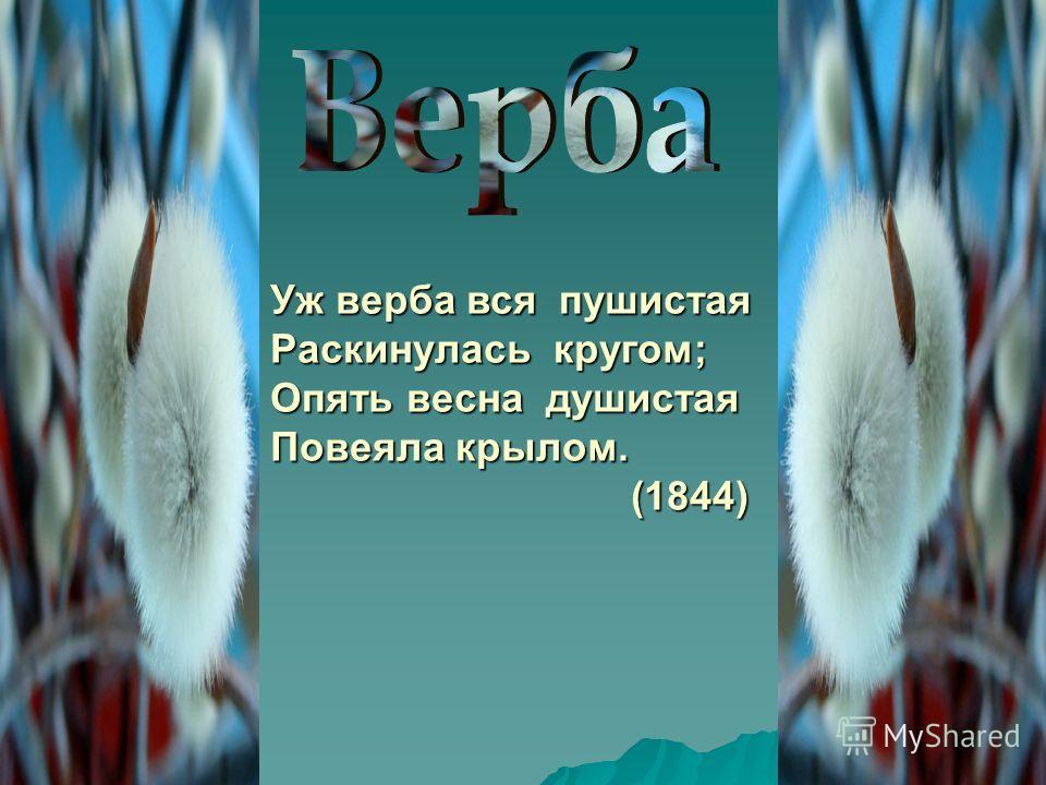 Уж верба вся пушистая Раскинулась кругом; Опять весна душистая Повеяла крылом. (1844) (1844)