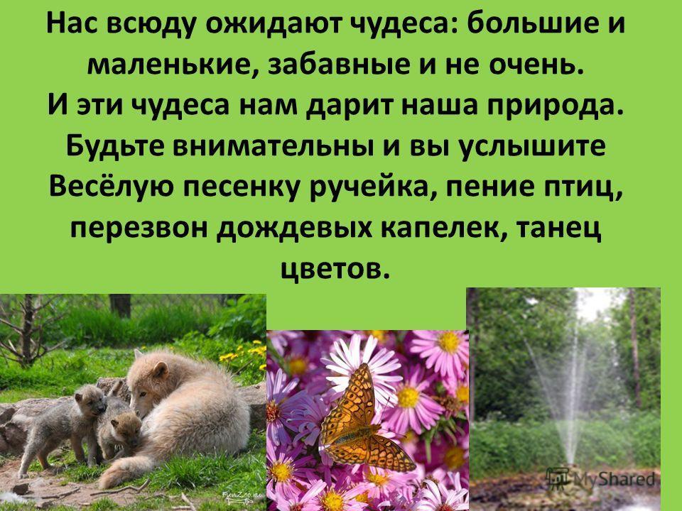Нас всюду ожидают чудеса: большие и маленькие, забавные и не очень. И эти чудеса нам дарит наша природа. Будьте внимательны и вы услышите Весёлую песенку ручейка, пение птиц, перезвон дождевых капелек, танец цветов.