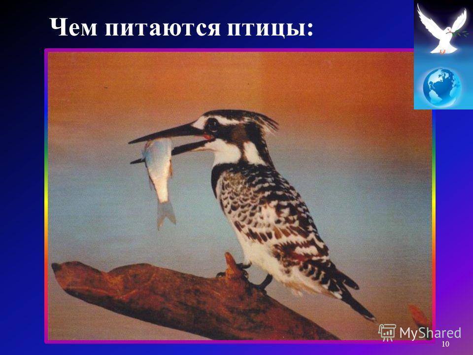 10 Чем питаются птицы :