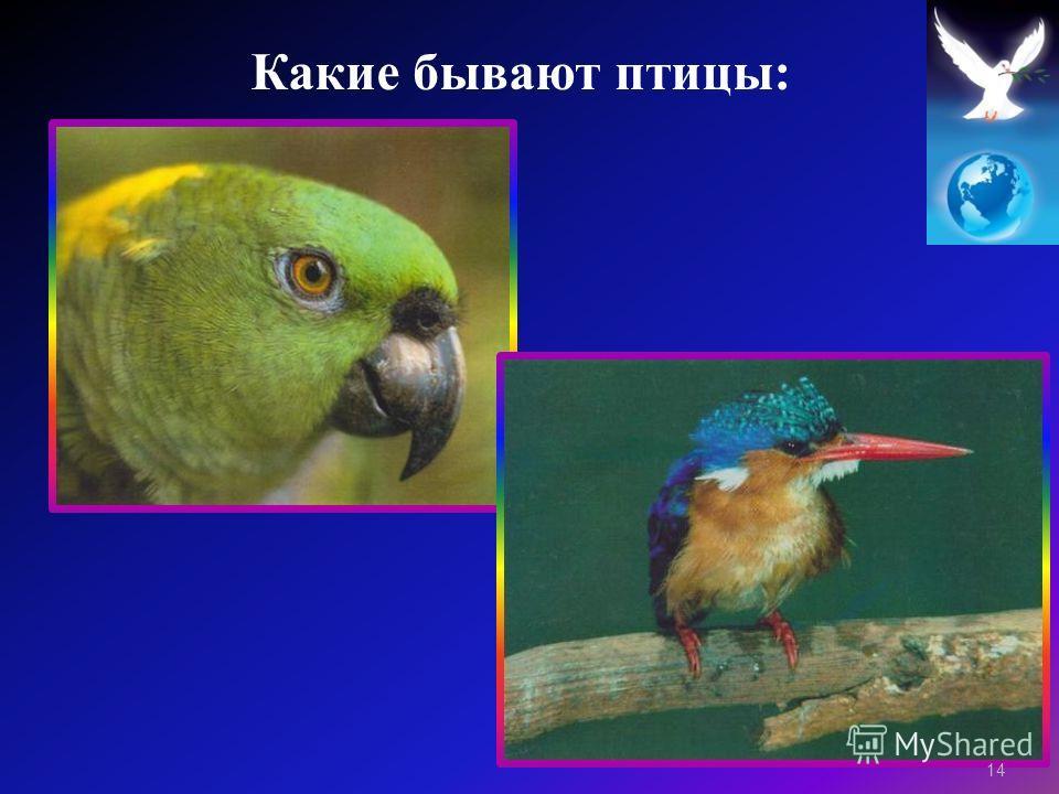 14 Какие бывают птицы :