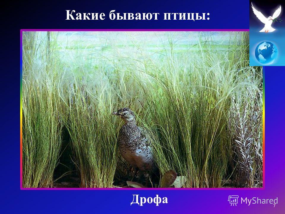 Дрофа 7 Какие бывают птицы :