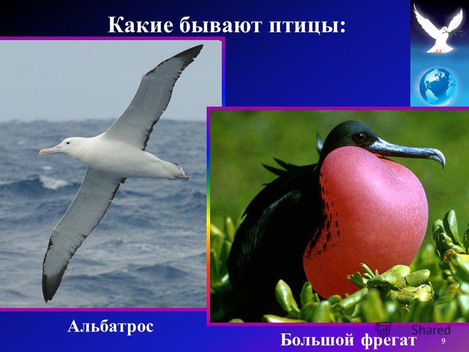 Альбатрос Большой фрегат 9 Какие бывают птицы :