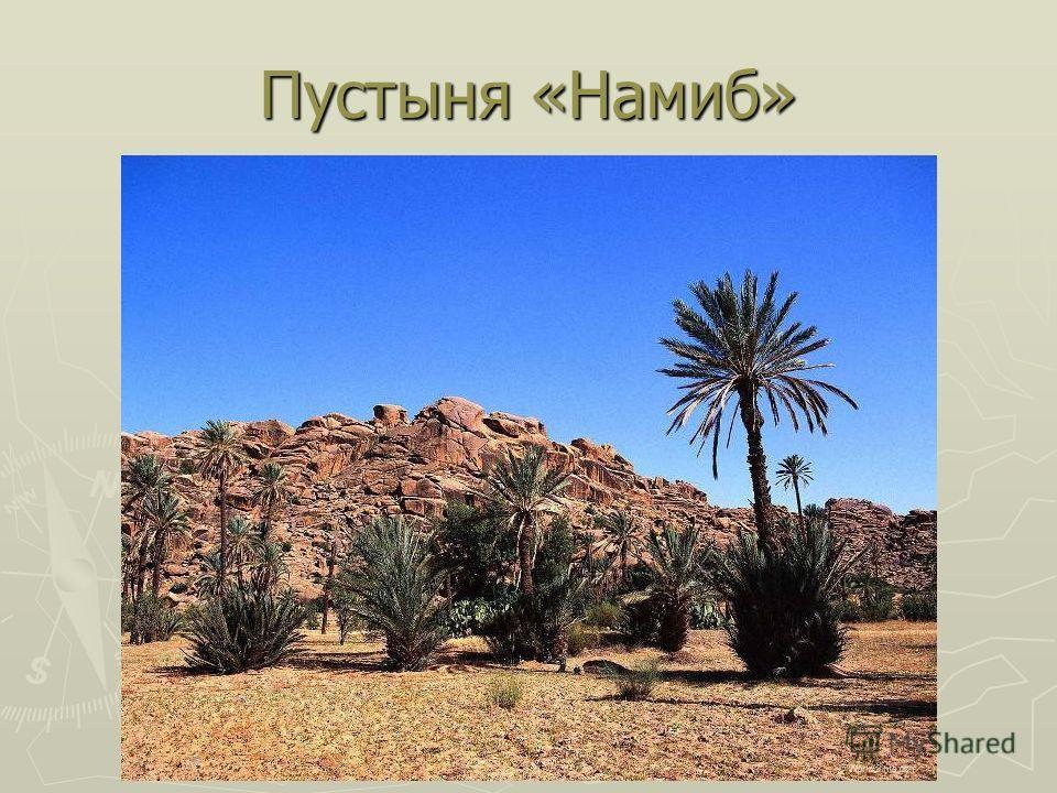 Пустыня «Намиб»