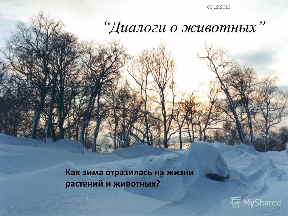 Как зима отразилась на жизни растений и животных? Диалоги о животных 03.12.2013 24