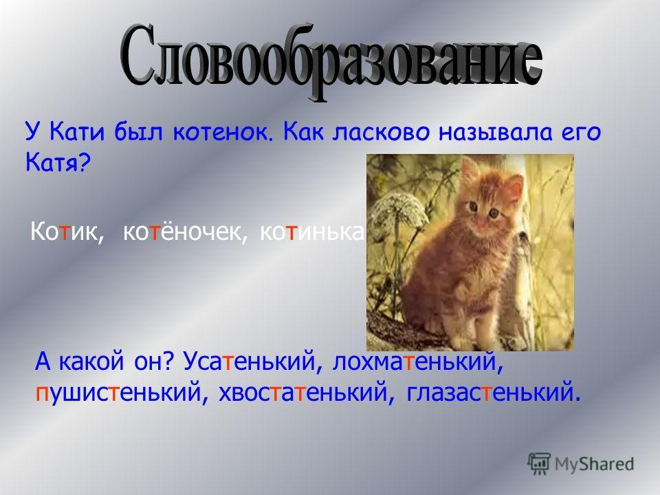 У Кати был котенок. Как ласково называла его Катя? Котик, котёночек, котинька. А какой он? Усатенький, лохматенький, пушистенький, хвостатенький, глазастенький.