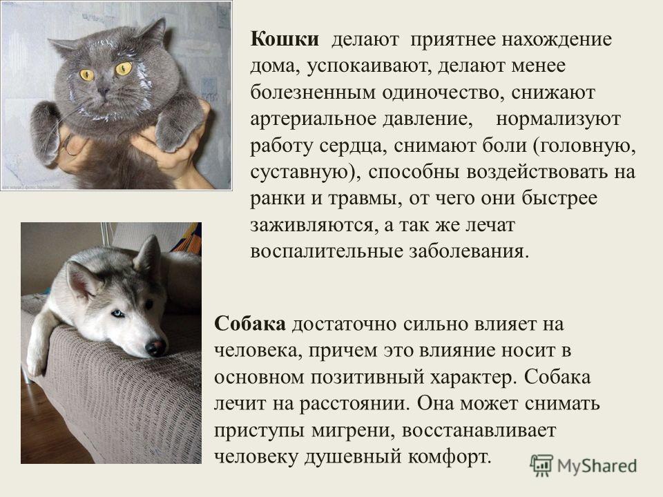 Собака достаточно сильно влияет на человека, причем это влияние носит в основном позитивный характер. Собака лечит на расстоянии. Она может снимать приступы мигрени, восстанавливает человеку душевный комфорт. Кошки делают приятнее нахождение дома, ус