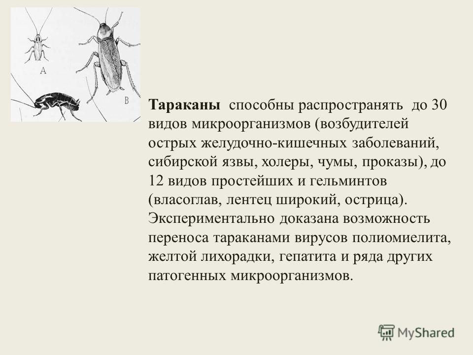 Тараканы способны распространять до 30 видов микроорганизмов (возбудителей острых желудочно-кишечных заболеваний, сибирской язвы, холеры, чумы, проказы), до 12 видов простейших и гельминтов (власоглав, лентец широкий, острица). Экспериментально доказ