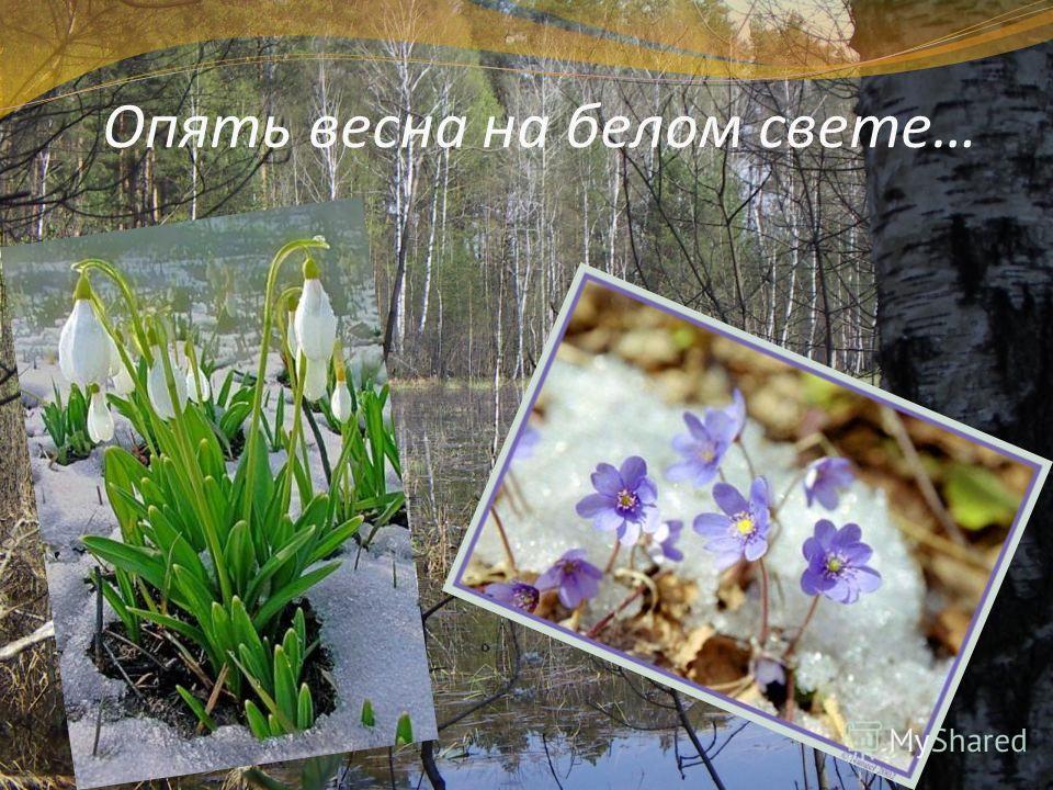 Опять весна на белом свете…