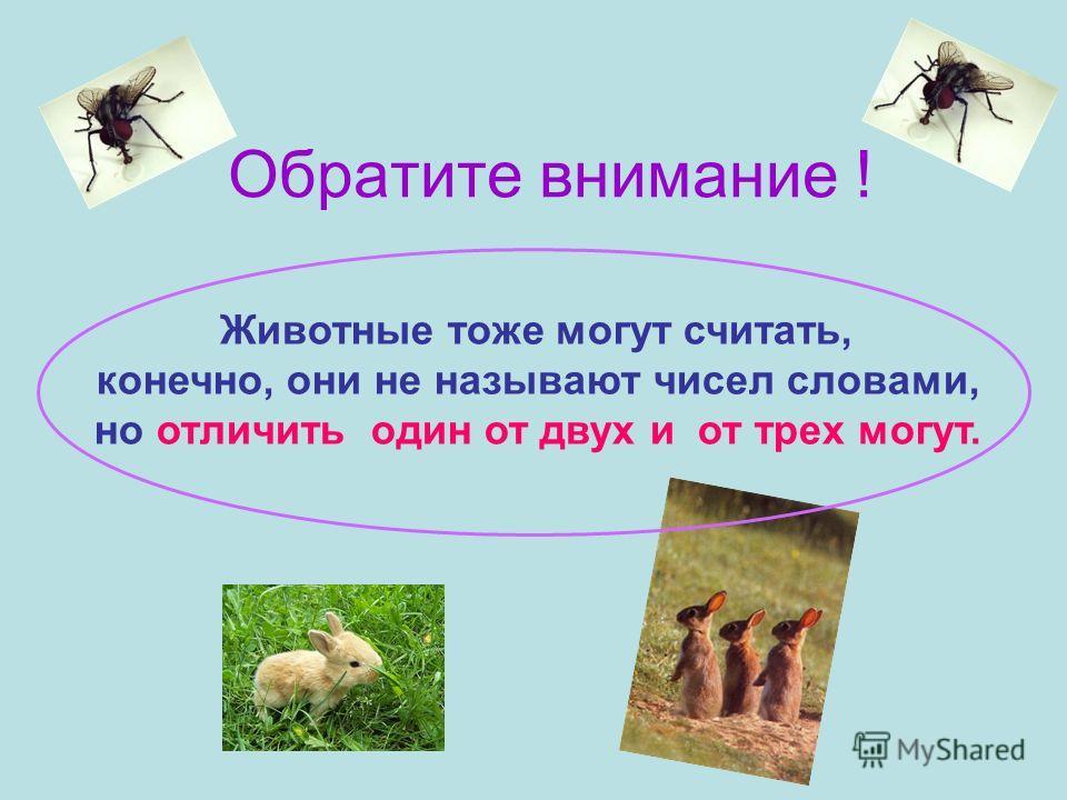 Животные тоже могут считать, конечно, они не называют чисел словами, но отличить один от двух и от трех могут. Обратите внимание !