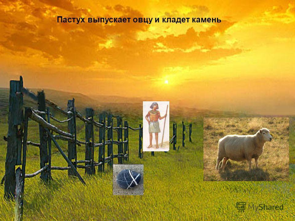 Пастух выпускает овцу и кладет камень