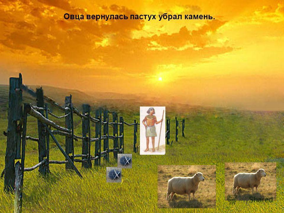 Овца вернулась пастух убрал камень.