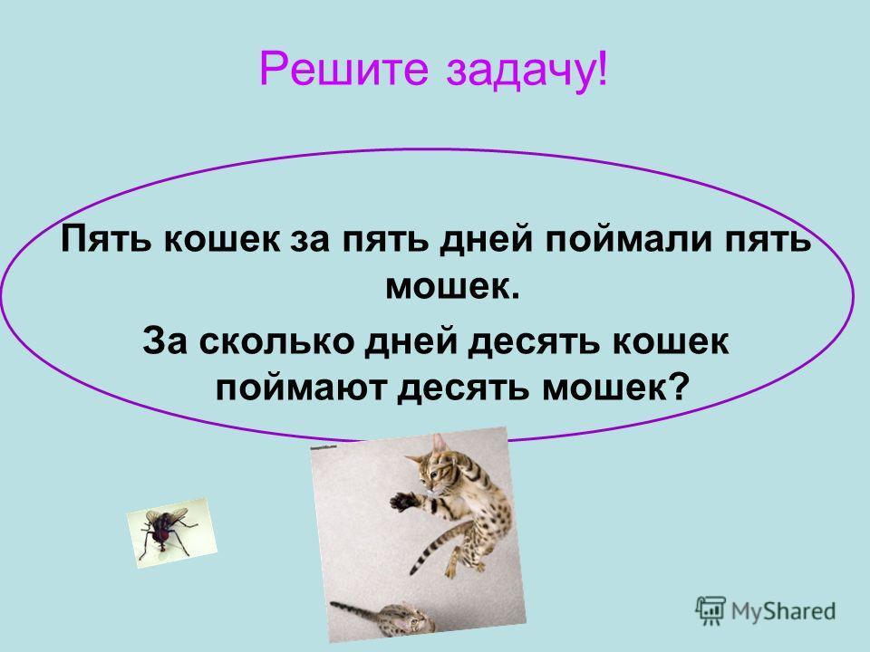 Решите задачу! Пять кошек за пять дней поймали пять мошек. За сколько дней десять кошек поймают десять мошек?