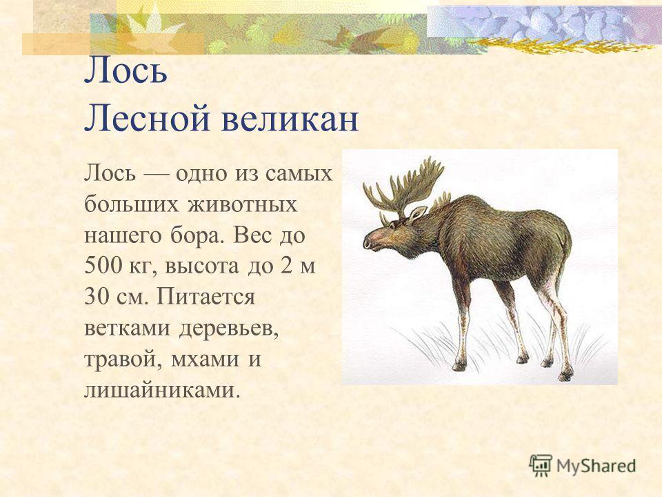 Звери Лось Бобр Речная выдра Красный волк Снежный барс Манул Хорь- перевязка