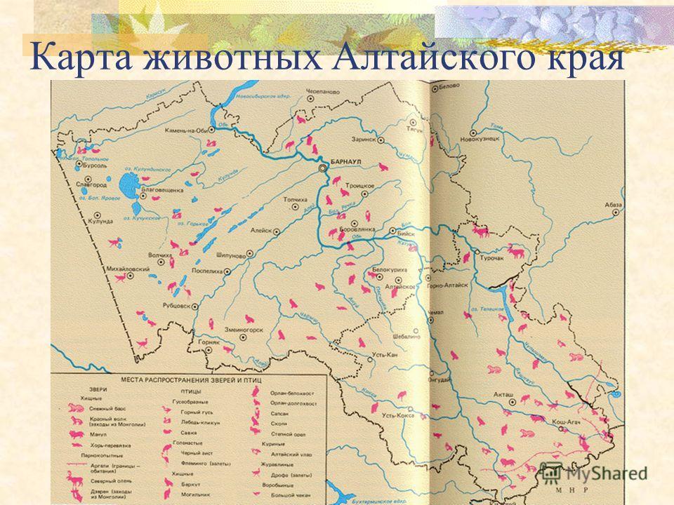 Демонстрационный материал для учащихся начальных классов Красная книга Алтайского края