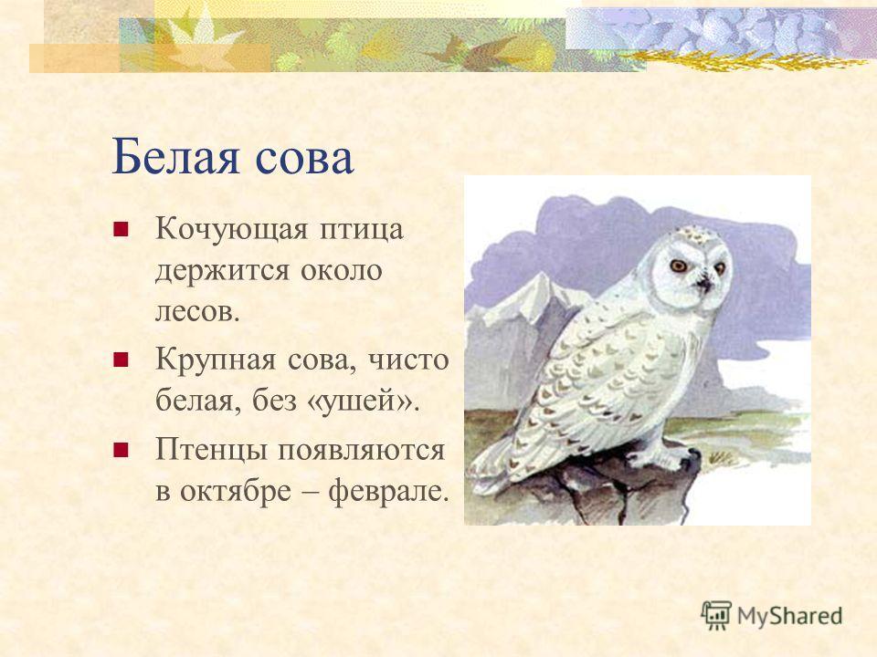 Беркут Птица безлесных или редколесных участков, поднятых на большую высоту ландшафта. Самый крупный из орлов. Гнездование начинается с конца марта.