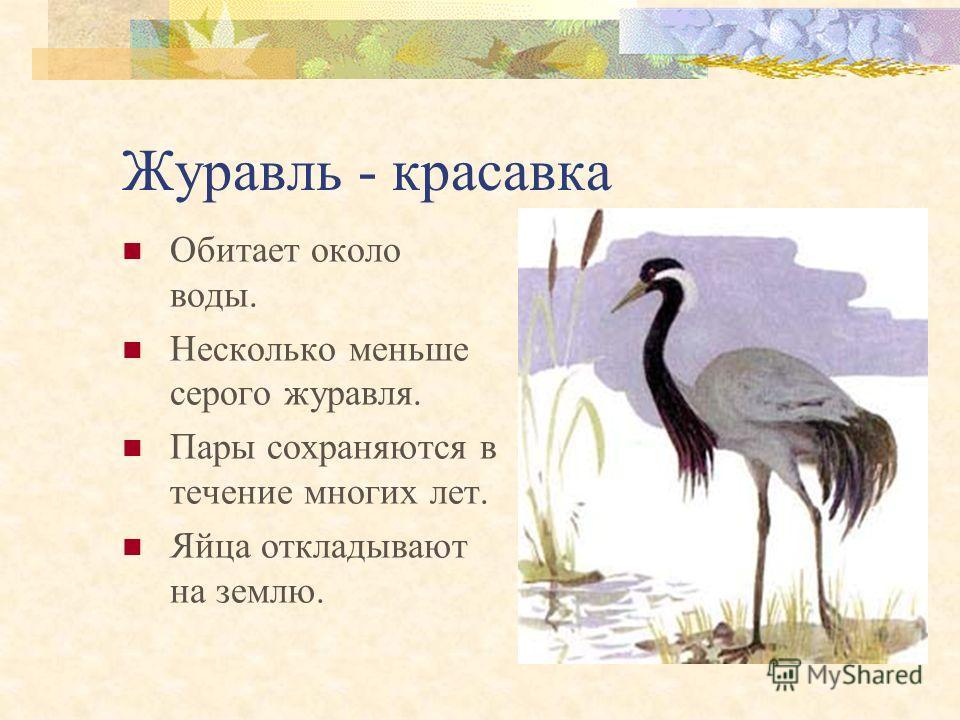 Филин Крупная серая сова массой 3–4 кг. Населяет лесные и горные районы Алтая. Гнезда устраивают на земле, в нишах скал, птенцы появляются весной.