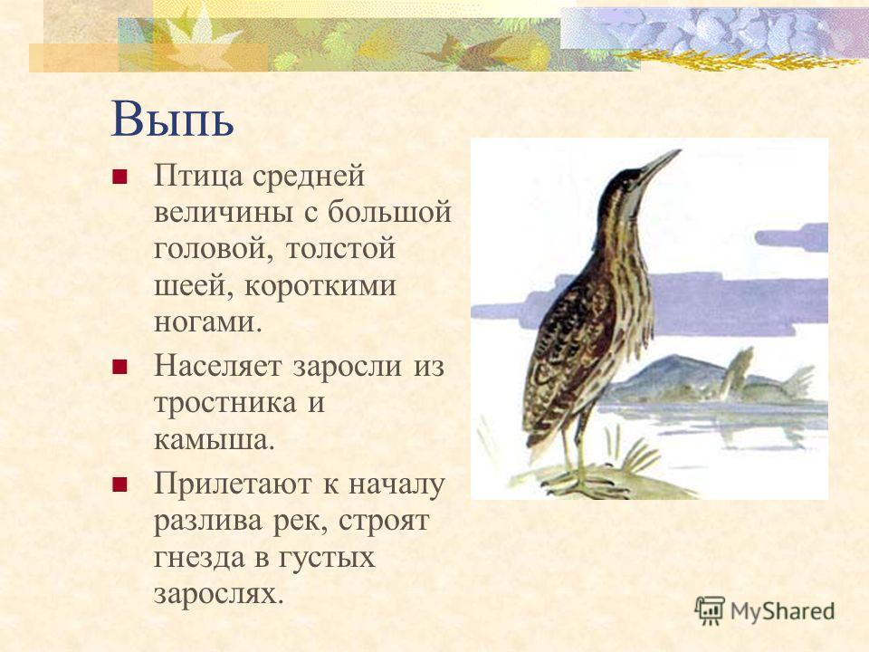 Журавль - красавка Обитает около воды. Несколько меньше серого журавля. Пары сохраняются в течение многих лет. Яйца откладывают на землю.