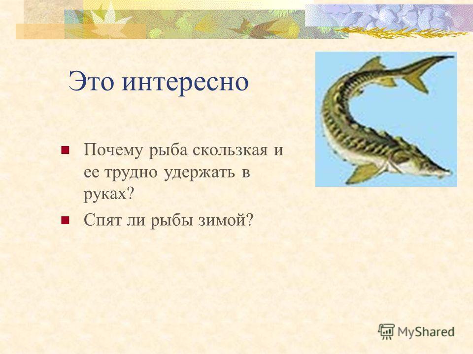 Красная Книга Алтайского Края Презентация