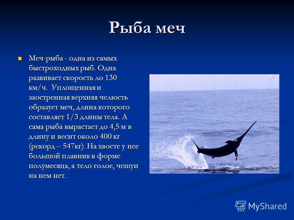 Рыба меч Меч-рыба - одна из самых быстроходных рыб. Одна развивает скорость ло 130 км/ч. Уплощенная и заостренная верхняя челюсть образует меч, длина которого составляет 1/3 длины тела. А сама рыба вырастает до 4,5 м в длину и весит около 400 кг (рек
