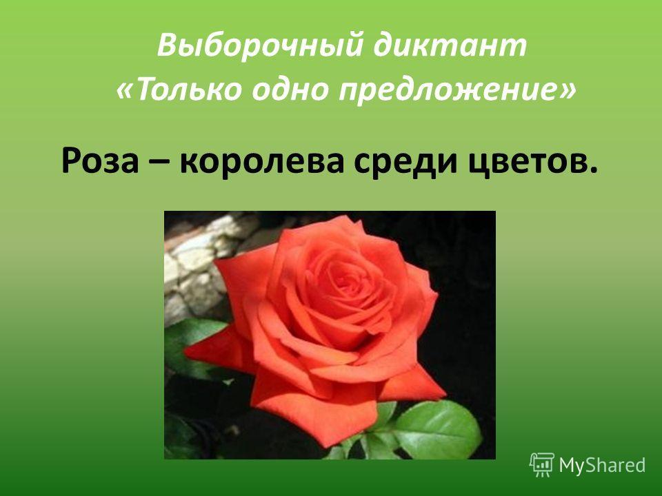 Выборочный диктант «Только одно предложение» Роза – королева среди цветов.