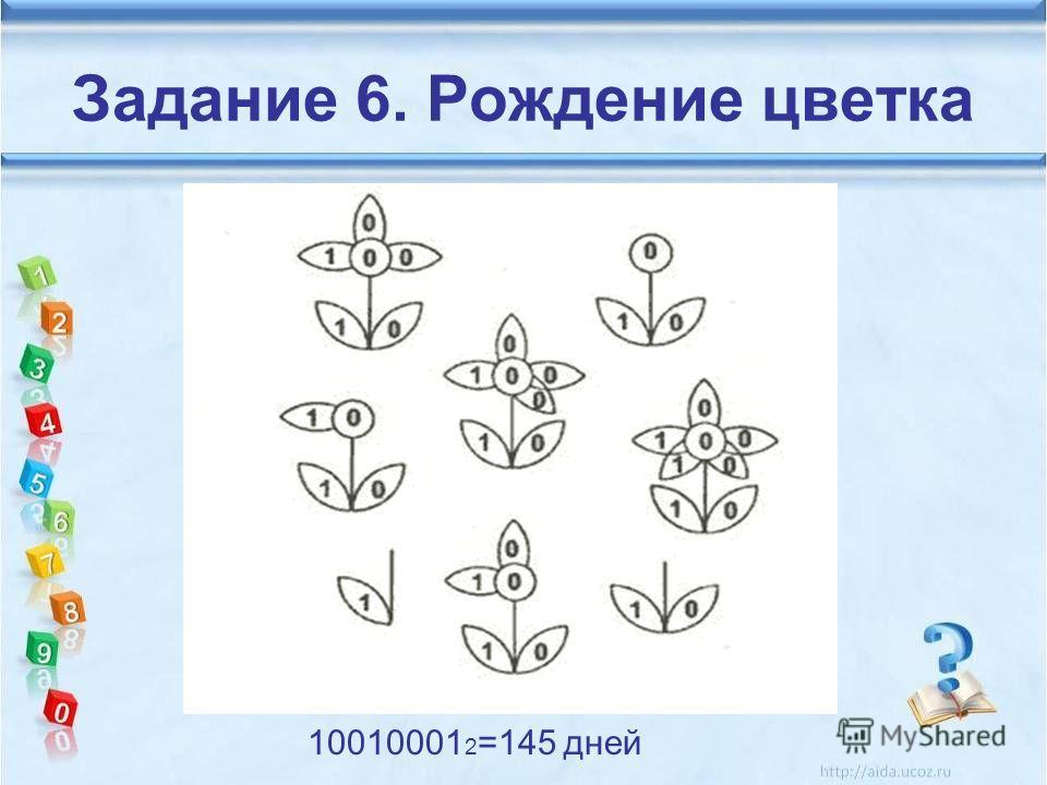 Задание 6. Рождение цветка 10010001 2 =145 дней
