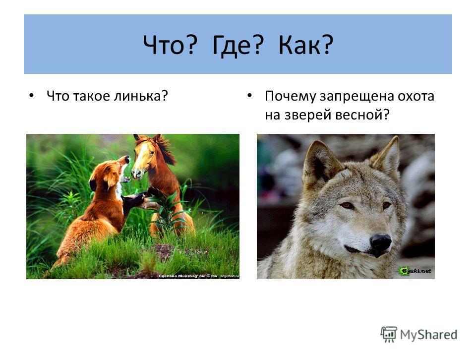 Что? Где? Как? Что такое линька? Почему запрещена охота на зверей весной?