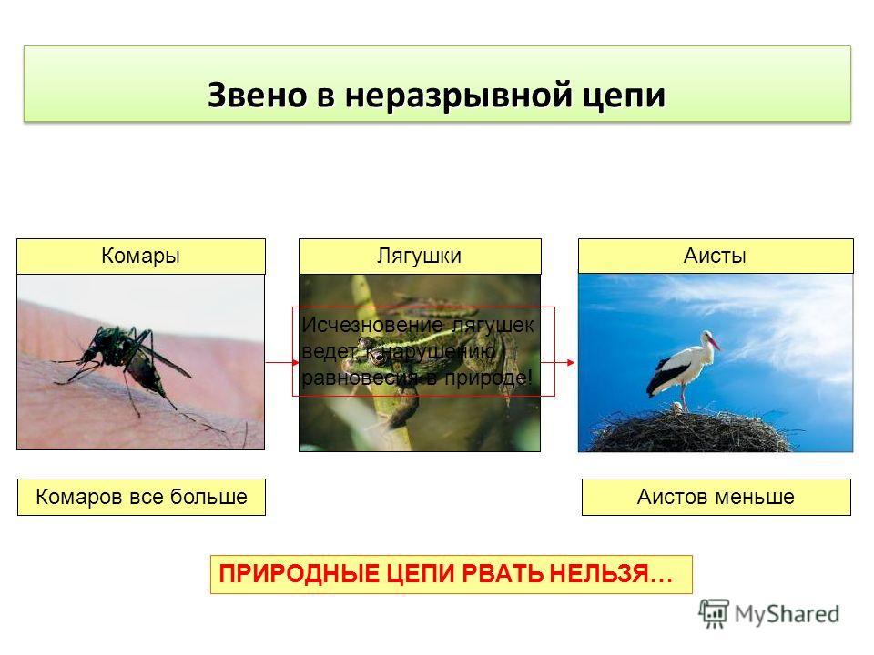 Звено в неразрывной цепи КомарыЛягушкиАисты Исчезновение лягушек ведет к нарушению равновесия в природе! Комаров все большеАистов меньше ПРИРОДНЫЕ ЦЕПИ РВАТЬ НЕЛЬЗЯ…