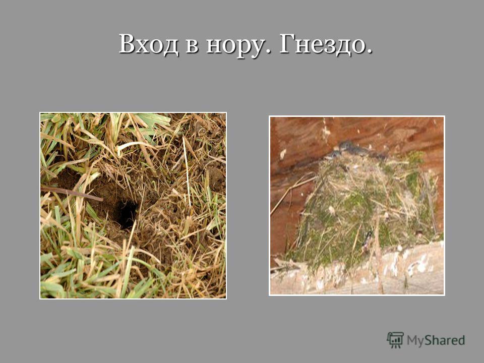 Вход в нору. Гнездо. Вход в нору. Гнездо.