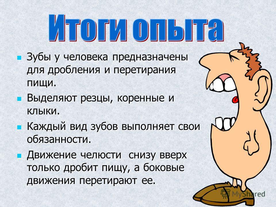 Зубы у человека предназначены для дробления и перетирания пищи. Зубы у человека предназначены для дробления и перетирания пищи. Выделяют резцы, коренные и клыки. Выделяют резцы, коренные и клыки. Каждый вид зубов выполняет свои обязанности. Каждый ви