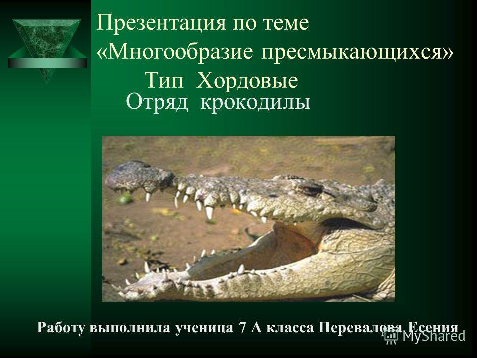 Презентация по теме «Многообразие пресмыкающихся» Тип Хордовые Отряд крокодилы Работу выполнила ученица 7 А класса Перевалова Есения