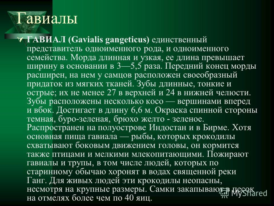 Гавиалы ГАВИАЛ (Gavialis gangeticus) единственный представитель одноименного рода, и одноименного семейства. Морда длинная и узкая, ее длина превышает ширину в основании в 35,5 раза. Передний конец морды расширен, на нем у самцов расположен своеобраз