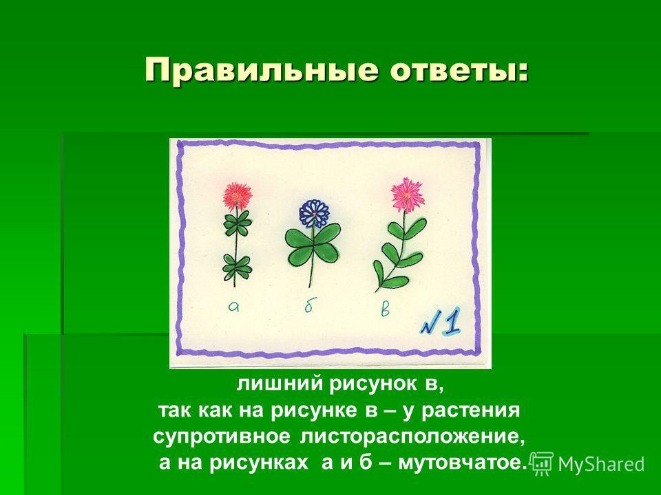 Правильные ответы: лишний рисунок в, так как на рисунке в – у растения супротивное листорасположение, а на рисунках а и б – мутовчатое.