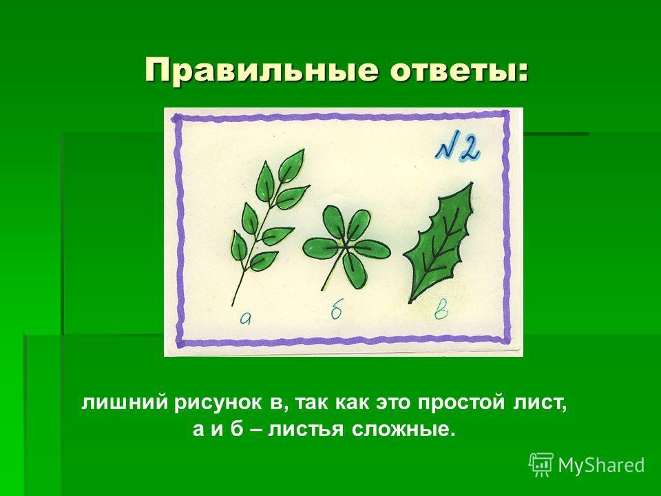Правильные ответы: лишний рисунок в, так как это простой лист, а и б – листья сложные.