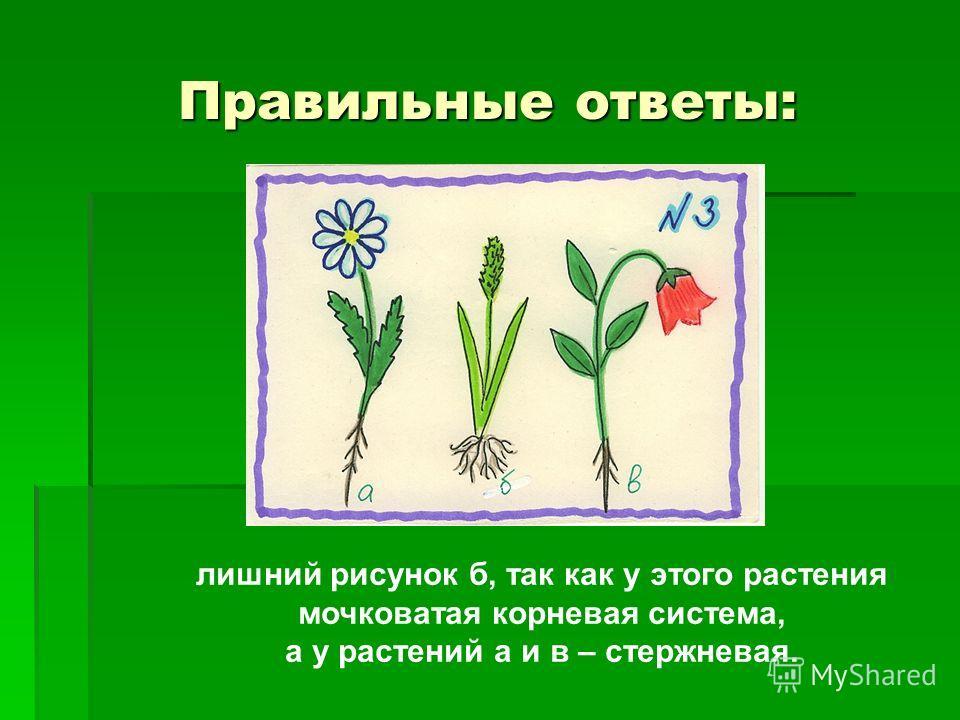 Правильные ответы: лишний рисунок б, так как у этого растения мочковатая корневая система, а у растений а и в – стержневая.