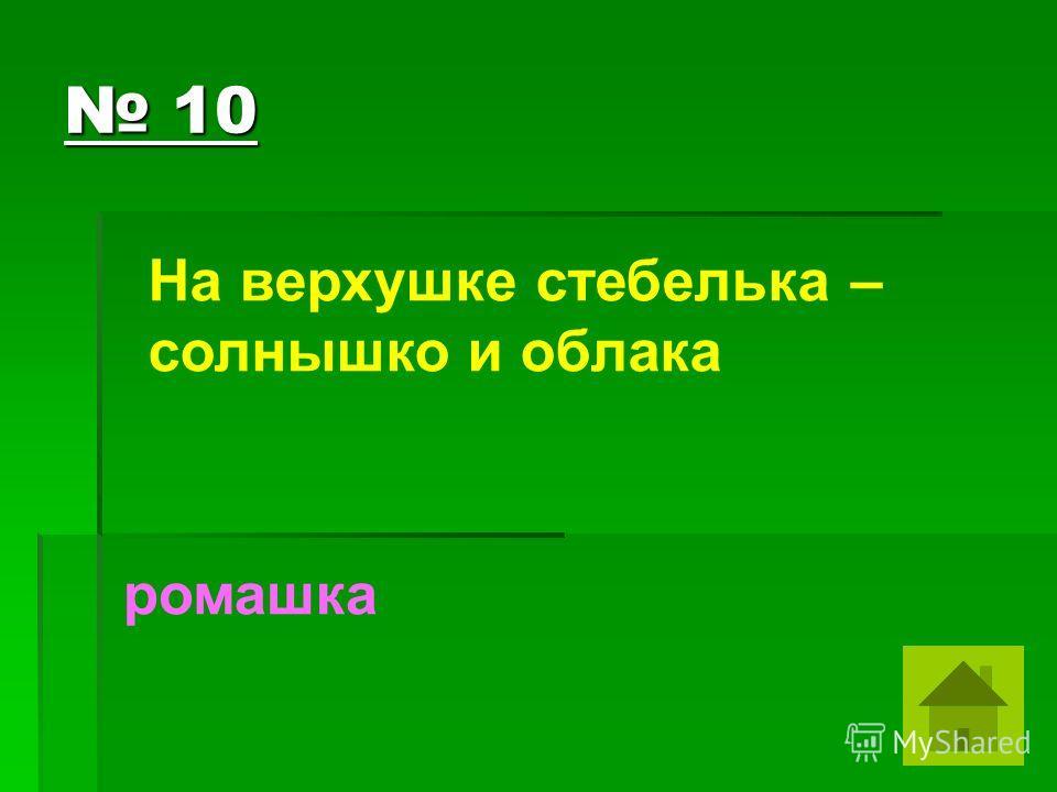 10 10 На верхушке стебелька – солнышко и облака ромашка