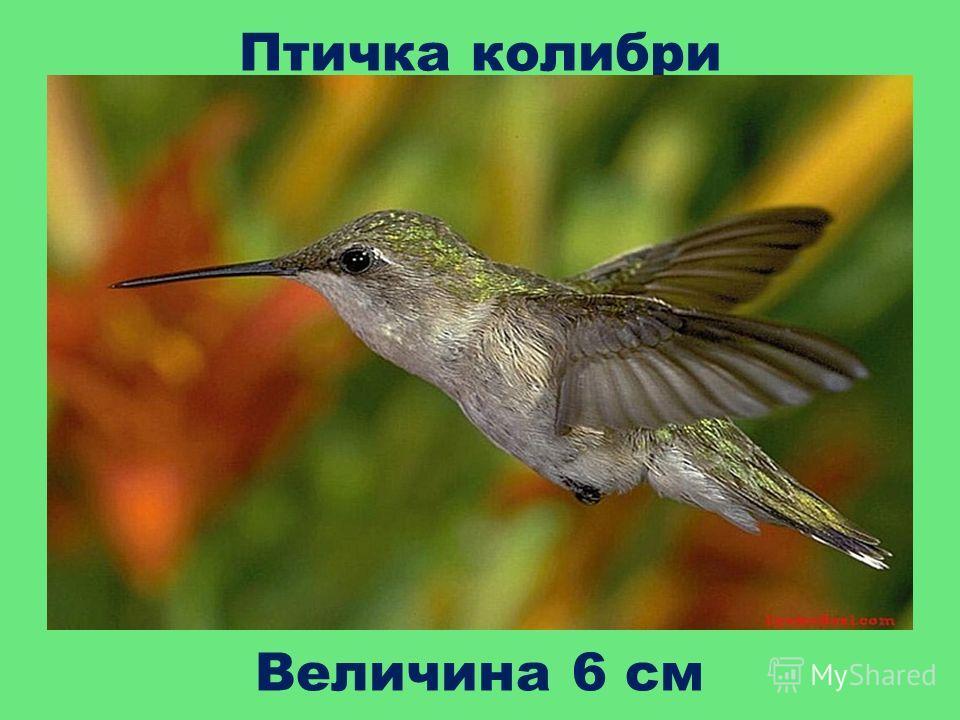 Птичка колибри Величина 6 см