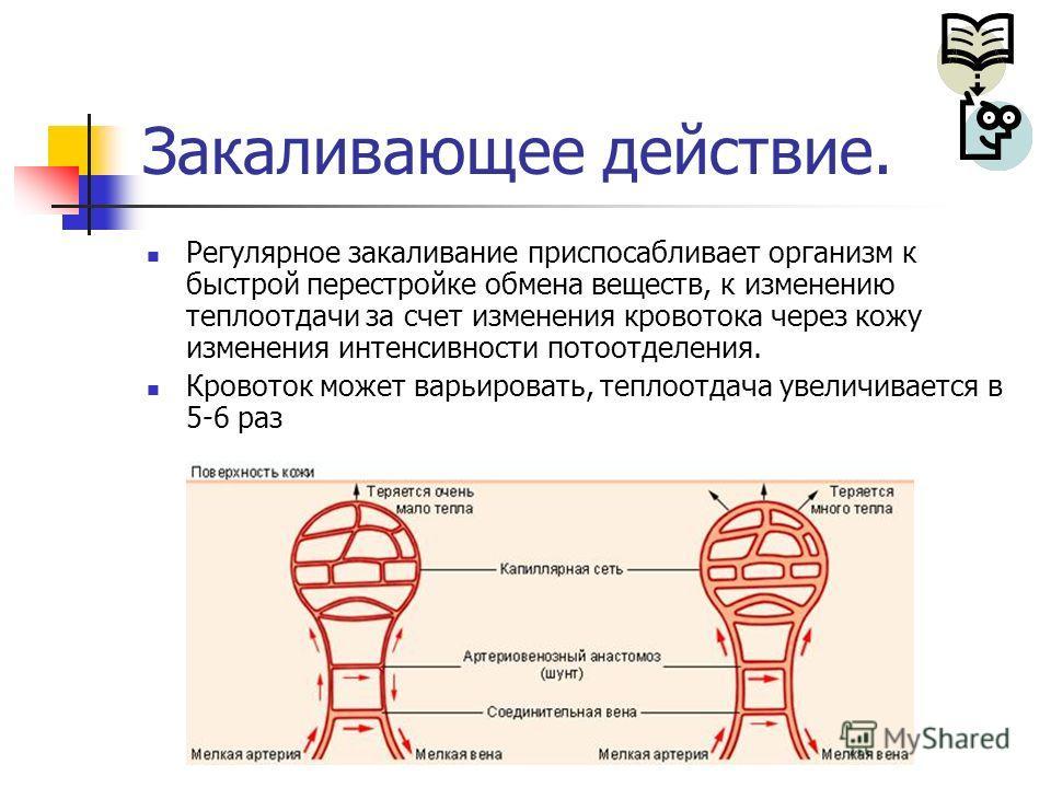 Закаливающее действие. Регулярное закаливание приспосабливает организм к быстрой перестройке обмена веществ, к изменению теплоотдачи за счет изменения кровотока через кожу изменения интенсивности потоотделения. Кровоток может варьировать, теплоотдача