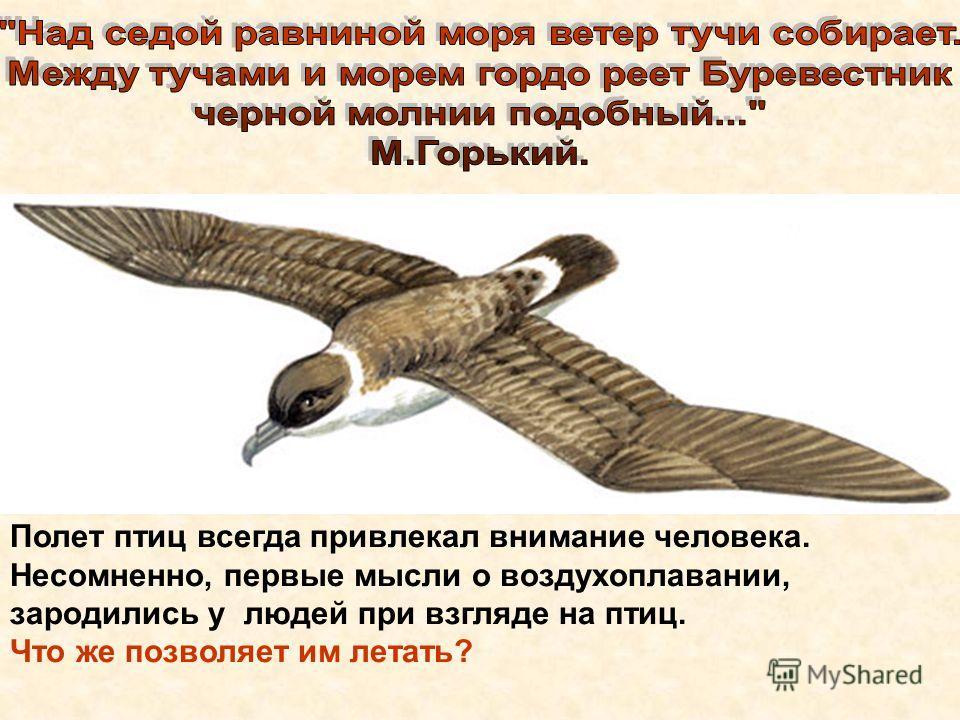 Полет птиц всегда привлекал внимание человека. Несомненно, первые мысли о воздухоплавании, зародились у людей при взгляде на птиц. Что же позволяет им летать?
