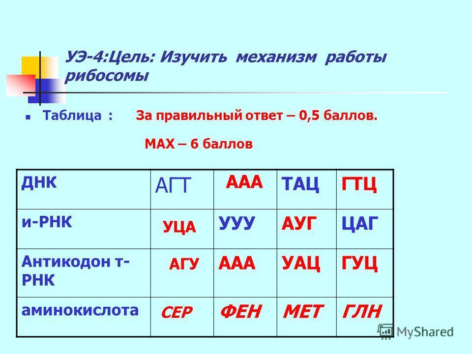 УЭ-4:Цель: Изучить механизм работы рибосомы Таблица : За правильный ответ – 0,5 баллов. МАХ – 6 баллов ДНК АГТ ТАЦГТЦ и-РНК УУУАУГЦАГ Антикодон т- РНК АААУАЦГУЦ аминокислота ФЕНМЕТГЛН УЦА ААА АГУ СЕР