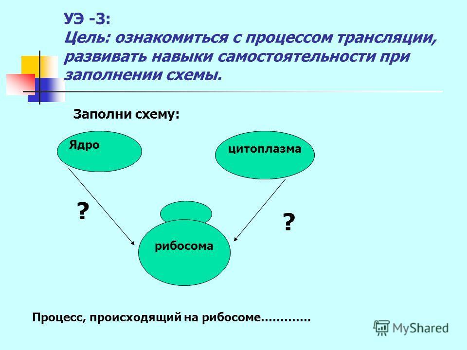 УЭ -3: Цель: ознакомиться с процессом трансляции, развивать навыки самостоятельности при заполнении схемы. Заполни схему: цитоплазма Ядро рибосома ? ? Процесс, происходящий на рибосоме………….