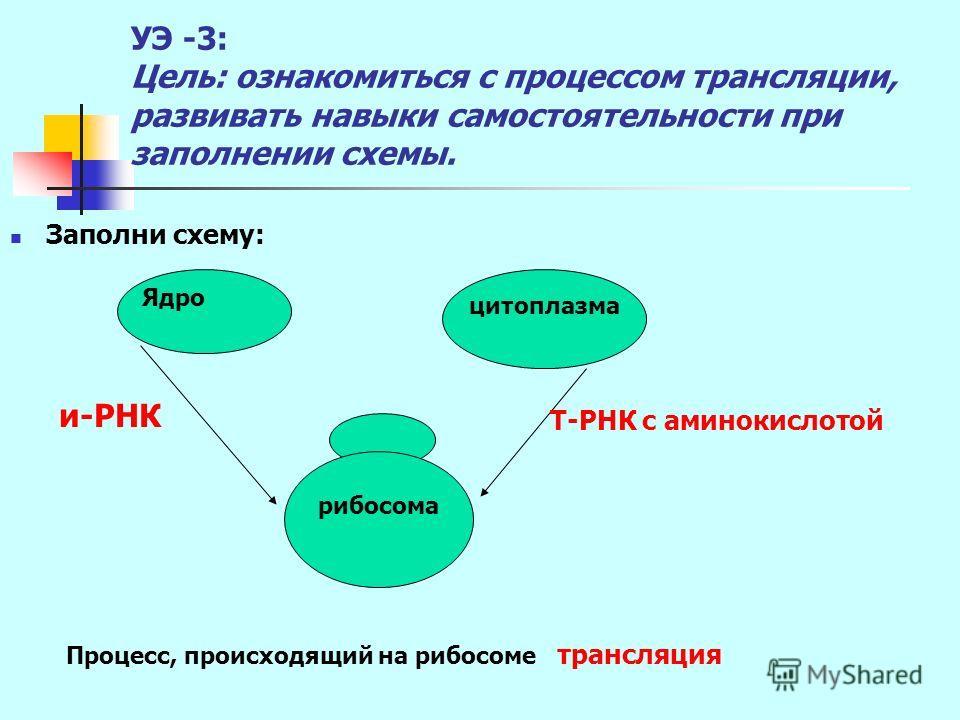 УЭ -3: Цель: ознакомиться с процессом трансляции, развивать навыки самостоятельности при заполнении схемы. Заполни схему: цитоплазма Ядро рибосома Т-РНК с аминокислотой и-РНК Процесс, происходящий на рибосоме трансляция